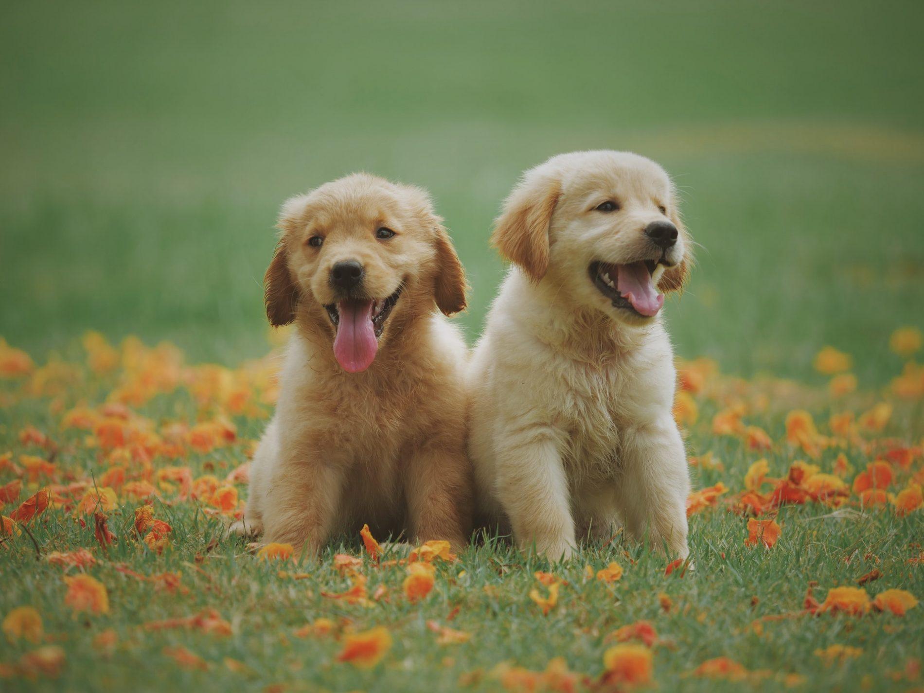 migliori cibi per cani